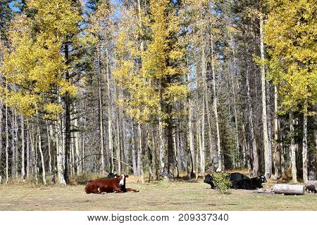 Fall color in Mancos State Park, Colorado