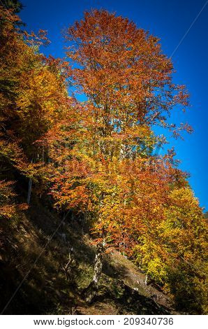 Autumn landscape. Colorful fall scene in the mountain forest.