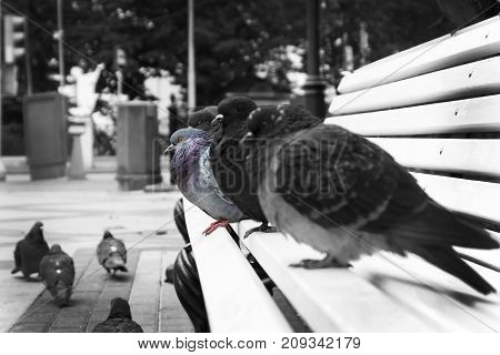 Pigeons sit on the bench , one stands out from the crowd. Be yourself don't imitate others.