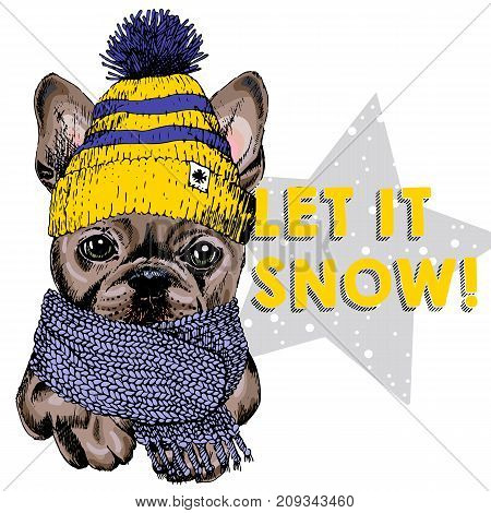 Close up vector portrait of French bulldog dog wearing beanie and scarf. Ski mode mood. Skecthed colored illustraion. Christmas Xmas New year. Party decoration promotion greeting card.