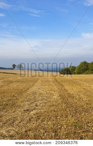 Wheat Stubble And Woodland