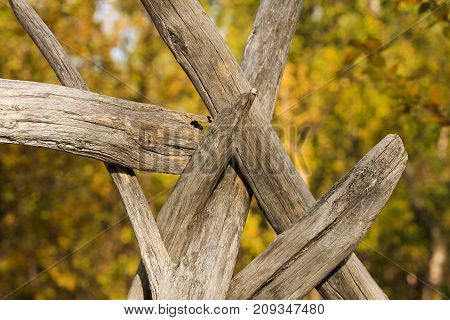 Sápmi skill, how to handle naturally, old, wooden bars. First step to a traditionally Sápmi tipi.