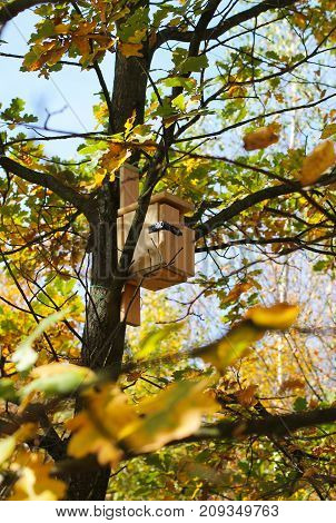 wooden nesting box on the tree with green and yellow leaves in autumn