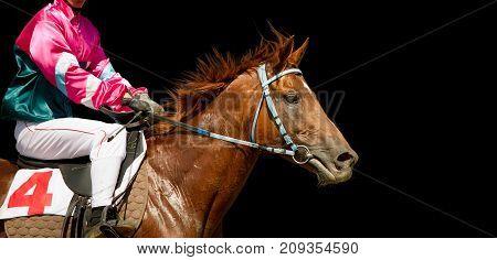 Jokey on a thoroughbred horse portrait isolated on black background
