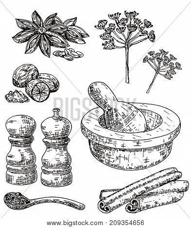 Vector ink hand drawn style set of culinary herbs and spices. Dill, star anise, black peppercorn, nutmeg, cinnamon, pepper mill, mortar and pestle sketch illustration for recipe and print.