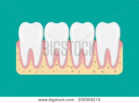 Tooths icon with gum. Human teeth in flat style. Dental concept. Hygiene and oralcare. Vector illustration