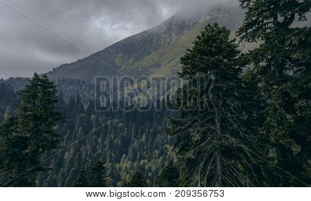 lonely trees against the background of mountains