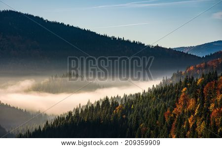 Forest In Valley At Foggy Sunrise