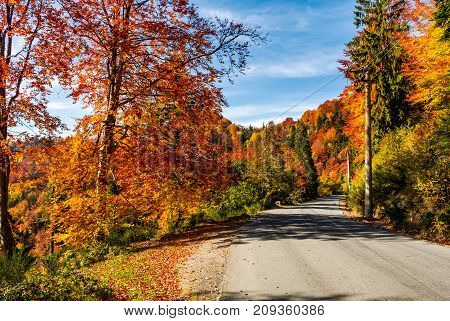 Asphalt Road Through Autumn Forest In Mountains