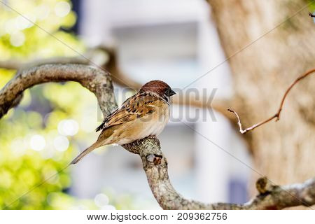 A cute litte Sparrow perched in a Tree