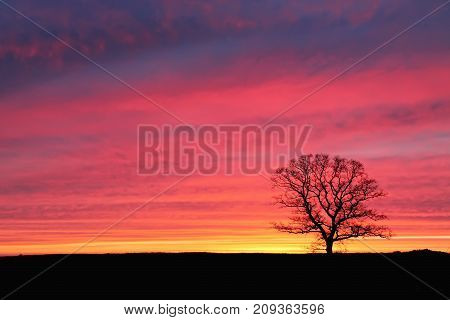 Lonely Tree At Sunset Against A Background Of Pink Sky
