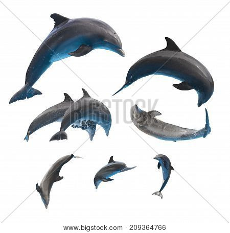 set of jumping and leaping dolphins isolated on white background