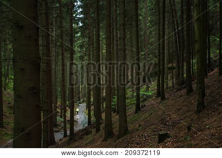 Trails In The Forest Of The Czech Republic