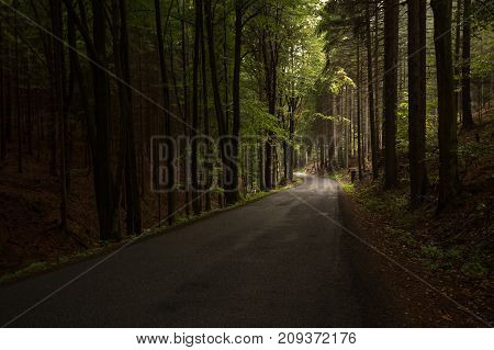 Road In The Forest In The Czech Republic
