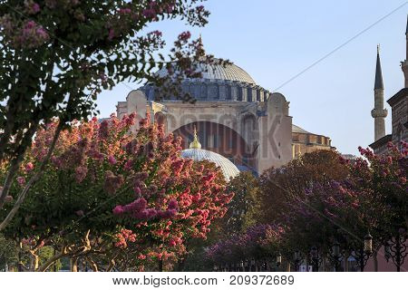 ISTANBUL, TURKEY - SEPTEMBER 11, 2017: These are domes of the Hagia Sophia through the blossoming trees of Sultanahmet Park. in the early autumn morning.