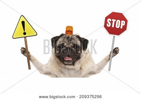 smiling pug dog holding up red stop sign and yellow exclamation mark sign with orange flashing light on head isolated on white background