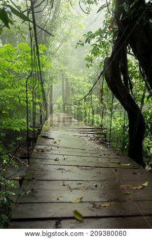 Old suspension bridge in rainforest Tenorio national park Costa Rica