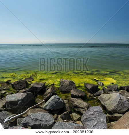 stony shore seaweed in the water baltic sea