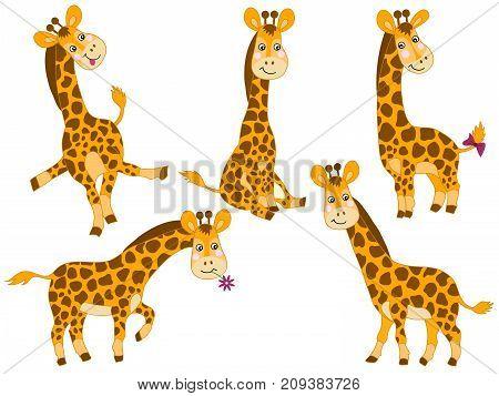 Vector set of cute cartoon giraffes. Vector baby giraffe. Giraffes vector illustration