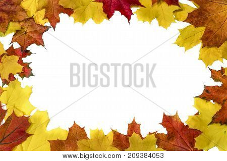 Yellow autumn maple leaves on a white background