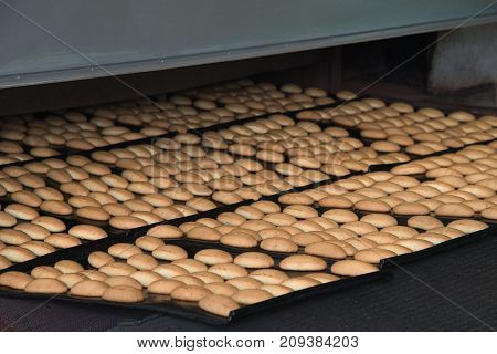 Production line of baking cookies on factory, food industry.