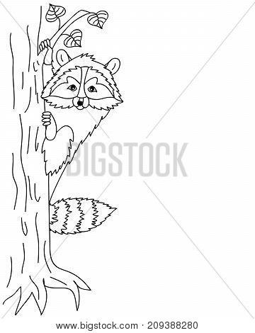 Vector black and white cute cartoon raccoon sitting on the tree. Vector raccoon. Racoon vector illustration