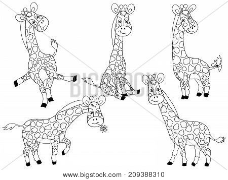 Vector set of black and white cute cartoon giraffes. Vector baby giraffe. Giraffes vector illustration