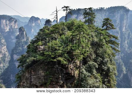Detail of the hill with trees on in, picturesgue landscape of Zhangjiajie mountain in Hunan province in China where the movie Avatar was shooted.
