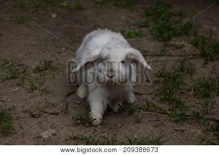 the rabbit walks along the sand. White Rabbit