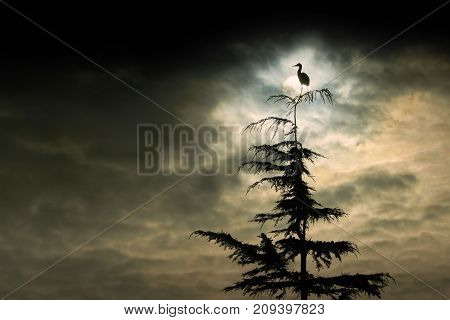 Heron Perch. A Great Blue Heron perched on a tree at sunrise in Richmond, British Columbia, Canada.