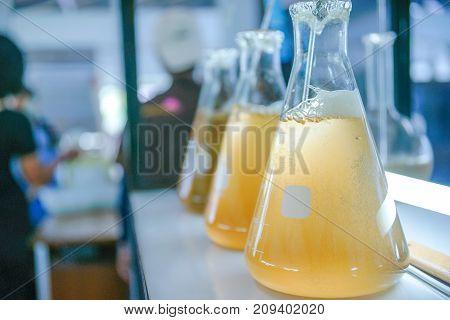 Marine plankton culture in the glassware laboratory.