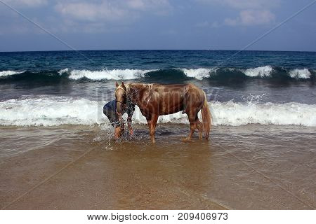man is bathing a horse on the shores of the Mediterranean Sea