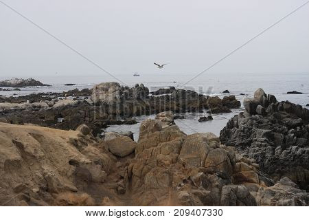 an image of the rocky shoreline of Pacific Grove, California