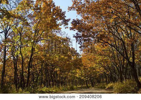 road to the sea through the autumn forest, bright autumn, autumn forest