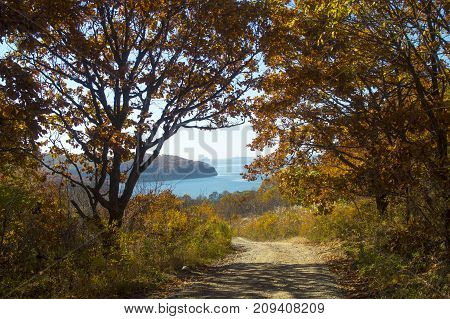 road to the sea through the autumn forest, bright autumn,