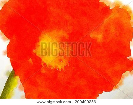 Nice Watercolor painting of a red Poppy