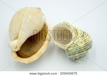 composition of sea shells on white background