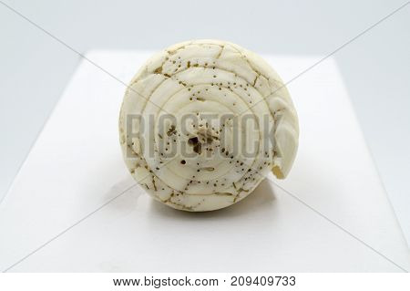 composition of sea shells on white background, spiral
