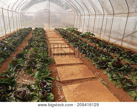gardener business concept : young plants growing in a greenhouse nursery