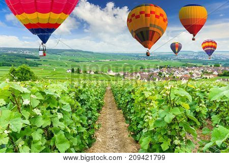 Colorful hot air balloons flying over champagne Vineyards at Montagne de Reims France