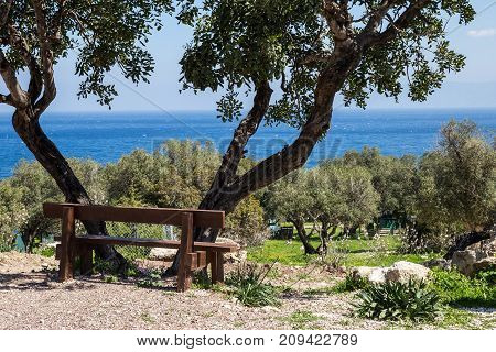 Landscape: Bench in the shade of an olive tree on the high seashore.