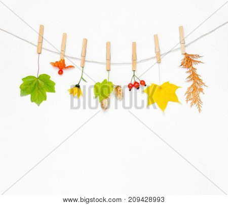Autumn composition. Autumn flower maple leaves and berries rose hips hops cones physalis on white background. Flat lay top view copy space