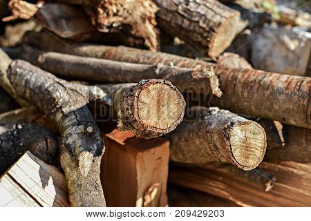 Wooden logs of pine woods in the forest, tree logs stacked up on top of each other in a pile.