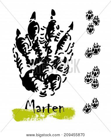 Wildlife animals. Traces of a marten. Footprints of variety of animals, illustration of black silhouette footprints. Vector illustration