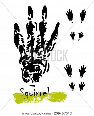 Wildlife animals. Traces of a squirrel. Footprints of variety of animals, illustration of black silhouette footprints. Vector illustration