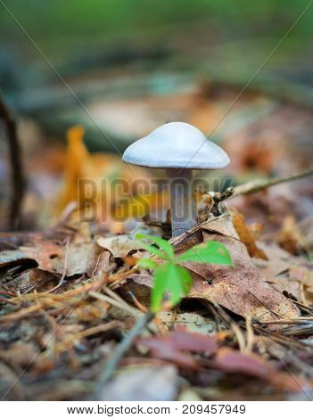 mushroom growing in the woods on a fallen tree