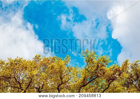 A Frame Of Leaves Against The Sky