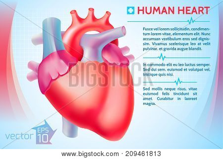Medical organ poster with red human heart text on blue background vector illustration