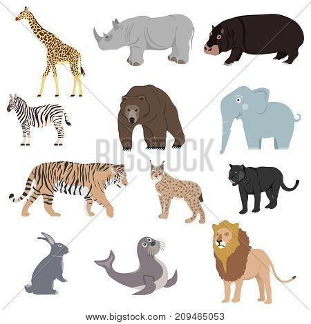 Animals, set of animals. Rhinoceros, lion, panther, lynx, giraffe, bear, zebra. Flat design, vector illustration, vector.