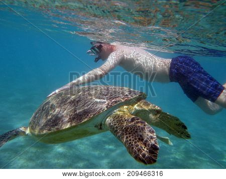 a man swims underwater with a large sea turtle